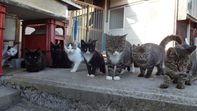 Tashirojima-Japan-Cat-Island-Cat-Gang-670x377