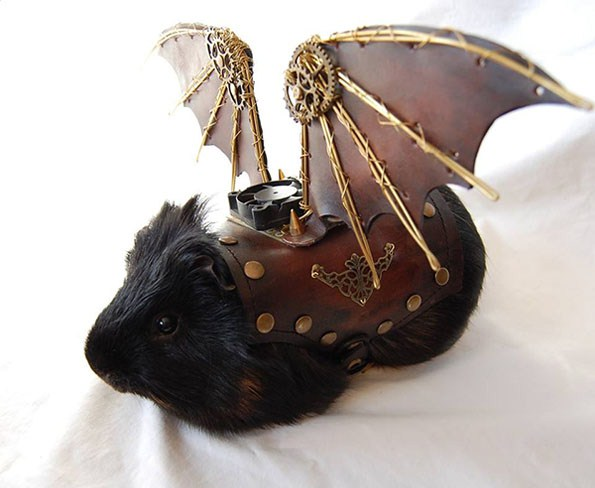 guinea-pig-steampunk-wings-1
