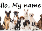 name-for-a-dog